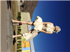 Erne Sherne loves Marilyn and Palm Springs!