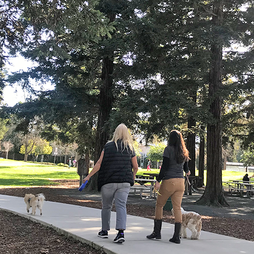 Two ladies walking dogs in park