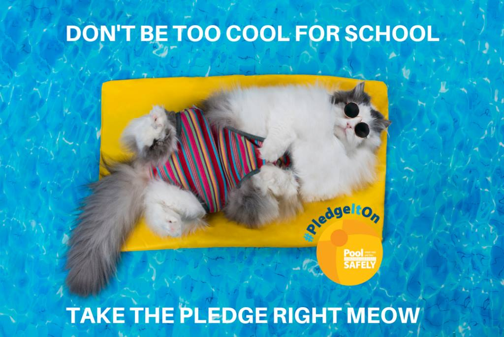 Pool Safely Pledge with a cat on a pool float  Opens in new window